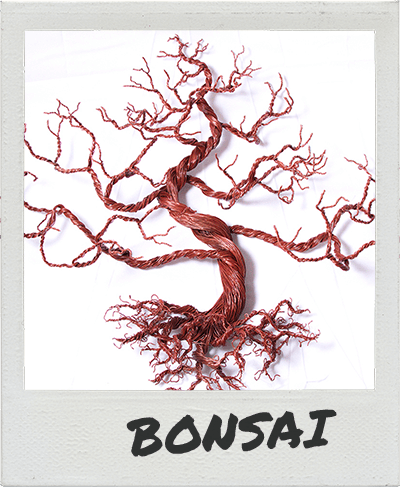 bonsai-polaroid
